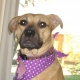 Josie – HHS Featured Pet for July